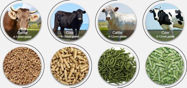 Animal Feed Wholesale