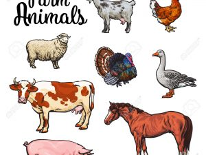 Livestock & Farm Animals