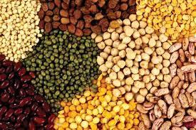 Oil Seed Wholesale