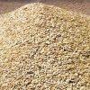 Buy Wheat Grains