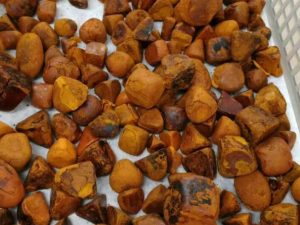 Buy Ox Gallstones