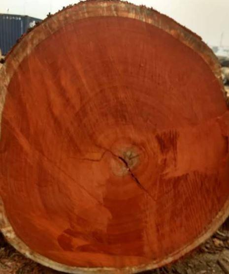 Africa Tali Wood Logs