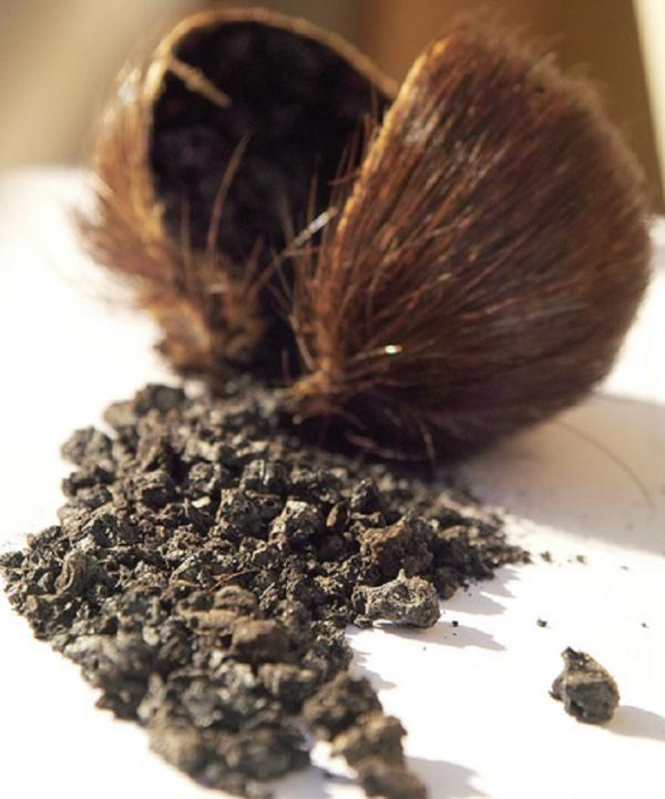 Pure DEER MUSK Powder 87%